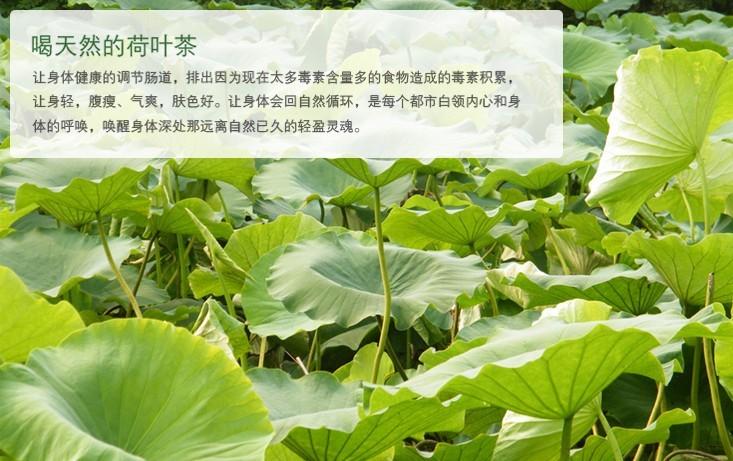 春暖人间333 未命名  b,荷叶茶的制作步骤一杀青:将叶片置于温度为100