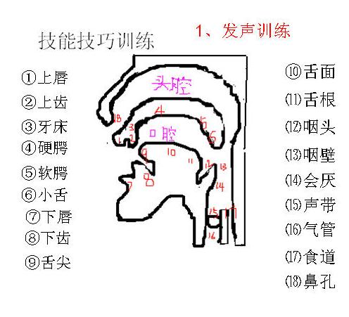 歌唱口腔结构图