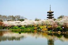 武汉东湖樱花园