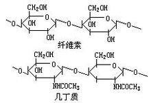 纤维素和几丁质分子结构图