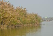 曹妃甸湿地公园