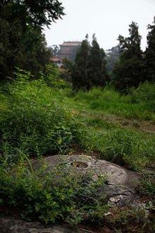 颐和园景色