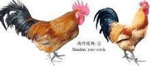 南丹瑶鸡(公)