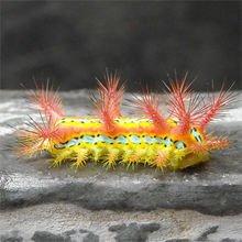 这是现实中在江浙很普遍分布的刺蛾的幼虫。