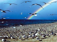 青海湖鸟岛风景