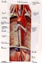 肌肉注射_食管_360百科