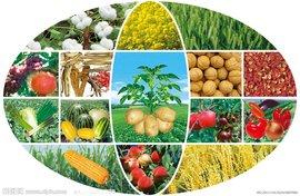 农作物 (1)