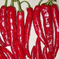 四百多年前的原种富硒玻璃牛角辣椒