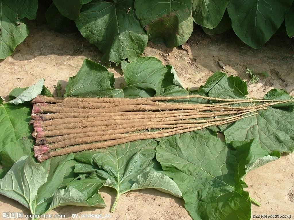 土人参有机肥栽培技术