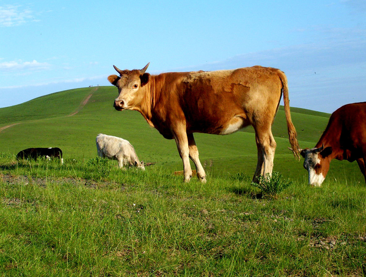 牛的象征_牛_360百科