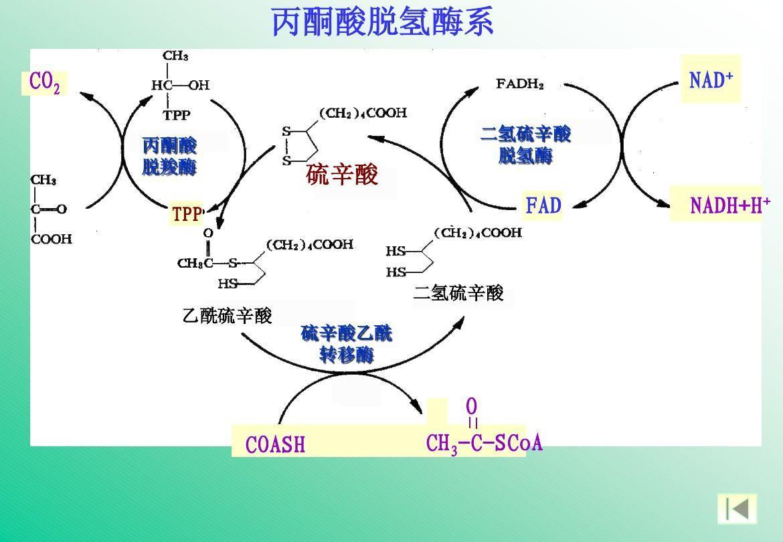 一氧化二氢事件_二氢硫辛酸脱氢酶_360百科