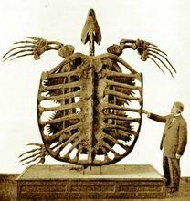 体型庞大的远古生物 你认识几种?